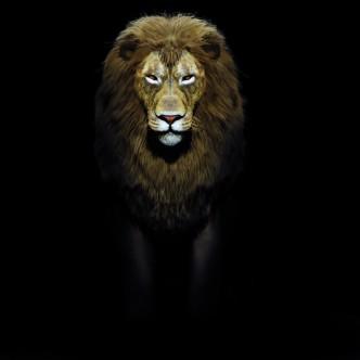 Création d'un modèle 3D: lion.