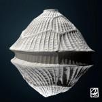"""Modélisation 3D:"""" micro-algues"""""""
